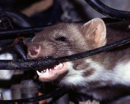 chống chuột phá xe ô tô